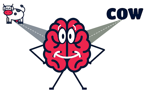 A picture of a brain with a graphic of a cow and the word cow.